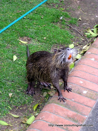 Buenos Aires City Zoo Gopher thing image