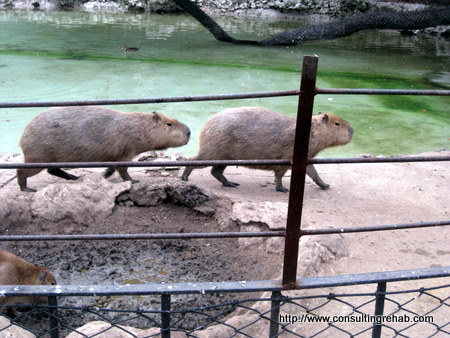 Buenos Aires City Zoo:  Weird guys Image