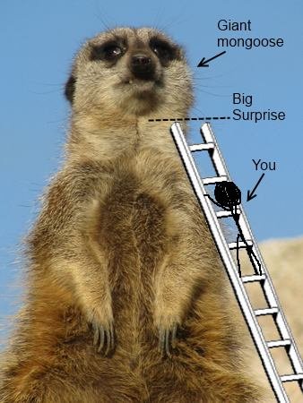 Mongoose With Ladder image